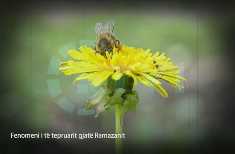 30 mesime per agjeruesit – Fenomeni i te tepruarit gjate Ramazanit 19