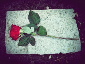 Rosa roja triste