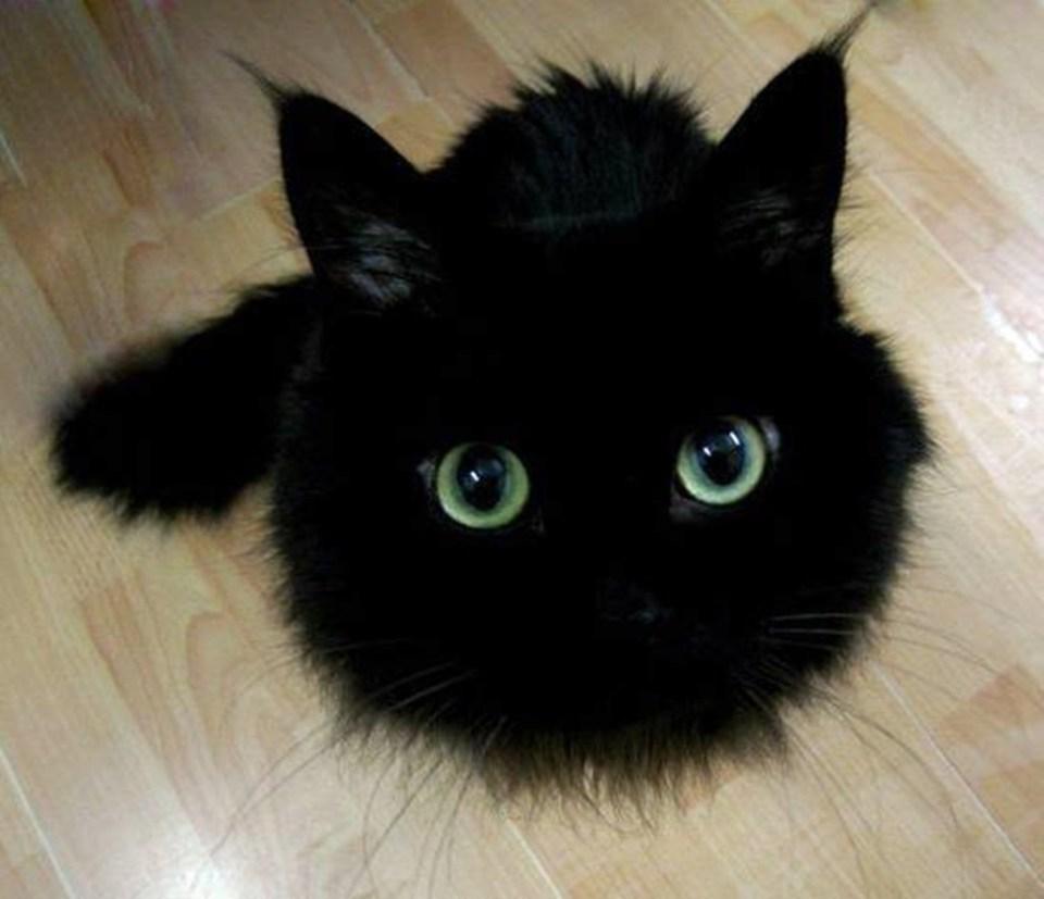 pisica neagra 1