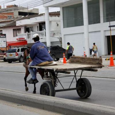 En Cartagena ordenaron 5 días de arresto y multa al Alcalde por incumplir sustitución de vehículos de tracción animal