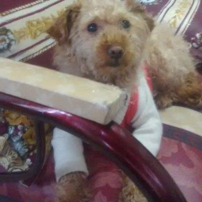 En Ipiales la Fiscalía condenó a 7 meses de prisión a un hombre por agresión con arma blanca a una canina