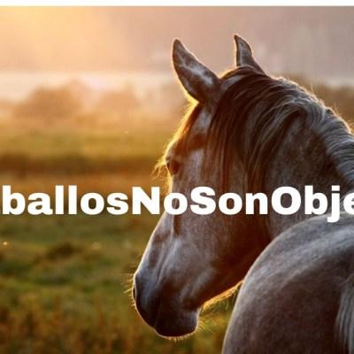 Organizaciones animalistas enviaron solicitud al Alcalde de Cali para frenar de una vez por todas las carretillas y el uso de los caballos de carabineros