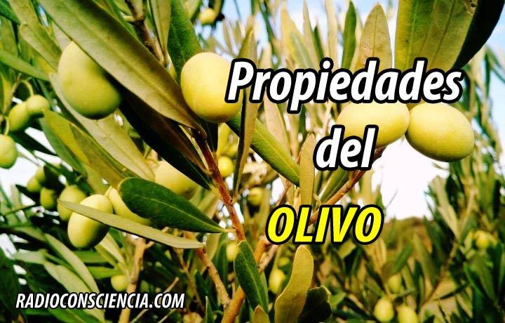 PROPIEDADES OLIVO OLIVA