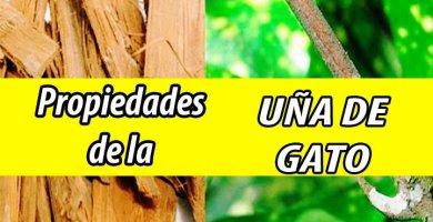 PROPIEDADES UÑA DE GATO