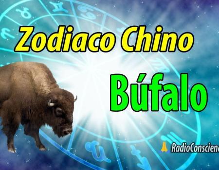 Horoscopo chino Búfalo o Buey