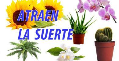 plantas-atraen-suerte-y-dinero