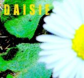 daisie profile-playlistA