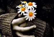 daisies-31stoct13