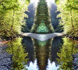 RedwoodDimension-sm11