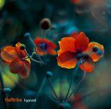 Halftribe-Hypnoid-RadioDAISIE