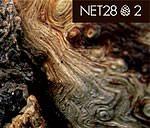 2_by_net28.jpg