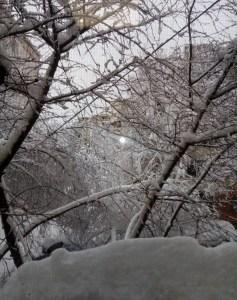 Prea mulți copaci din municipiu au căzut sub greutatea zăpezii