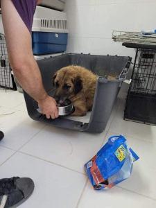 Câine maltratat, salvat de polițiștii tulceni!