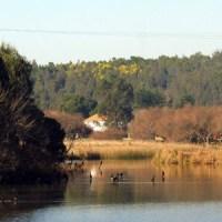 HUMEDALES EN CORONEL: Patrimonio Ambiental que debemos proteger