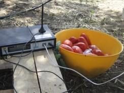 GSM per telefono e cibo tipico. 2014