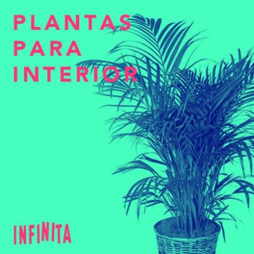 3385ccd957 plantas para interior