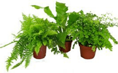 Turn Your Home Into An Oasis With These Indoor Plants
