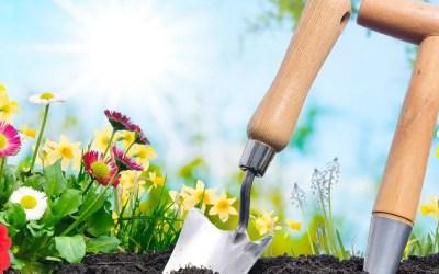 Gardening for Beginners – 111020