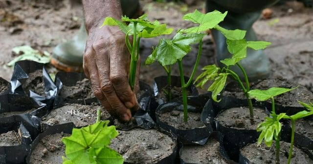 Five Million Trees Planted in a Day in Green Ghana Project
