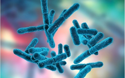 [LISTEN] Probiotic Technology Plays Important Role in Human Health