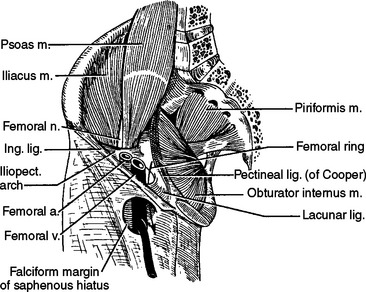 NORMAL ANATOMY OF THE FEMALE PELVIS AND TRANSVAGINAL