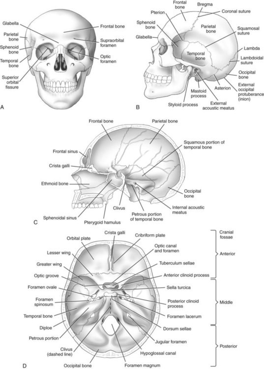 diagram of a skull