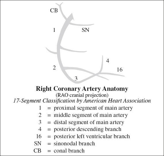 Anatomy Radiology Key