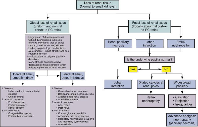 Diffuse Renal Parenchymal Diseases Radiology Key