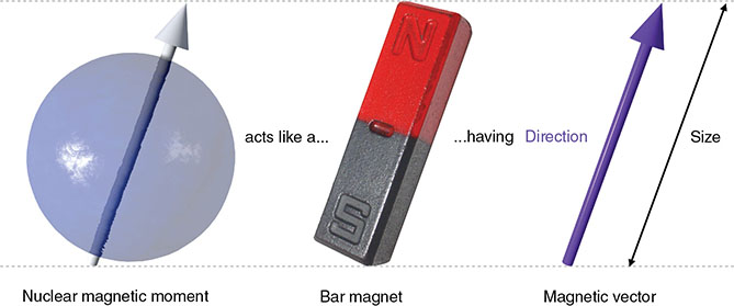 Diagram shows nuclear magnetic moment on left, bar magnet in middle, and magnetic vector on right.