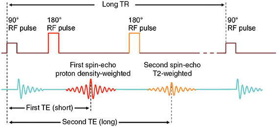 Diagram shows pulse sequence of spin-echo where four sets of pulses are displayed with dimensions of long TR and second TE (long).