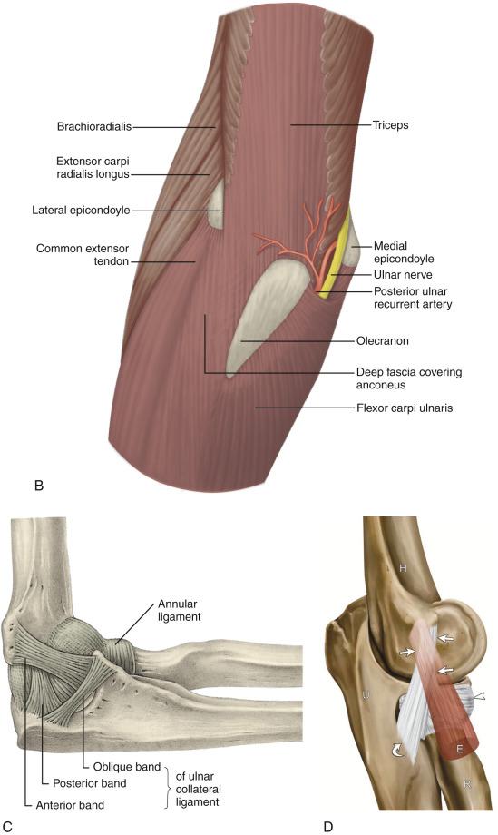 Elbow Ultrasound Radiology Key