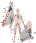 Clinical Vascular Examination