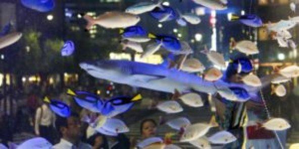 Más de 1.200 peces muertos en el mayor acuario de Tokio - th_1cce678baa2865fe866ba90e481edd63_acuario-peces-Tokio-300x150