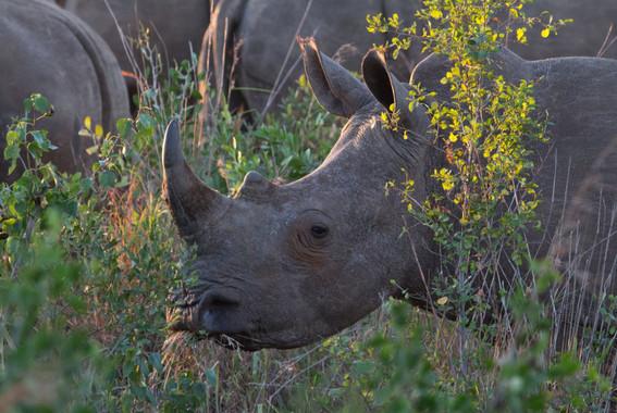 Las guerras de África amenazan al 70% de sus áreas protegidas - Las-guerras-de-Africa-amenazan-al-70-de-sus-areas-protegidas_image_380