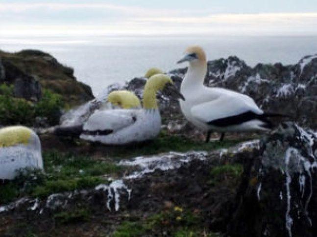 """Muere en Nueva Zelanda el """"pájaro más solitario del mundo"""" - 53f0296b4b92a40d18c389979e33d27303e5e7ab-300x225"""