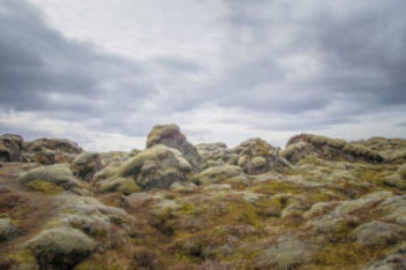 La tierra se está quedando sin musgos, algas y líquenes - La-tierra-se-esta-quedando-sin-musgos-algas-y-liquenes_image640_-300x200
