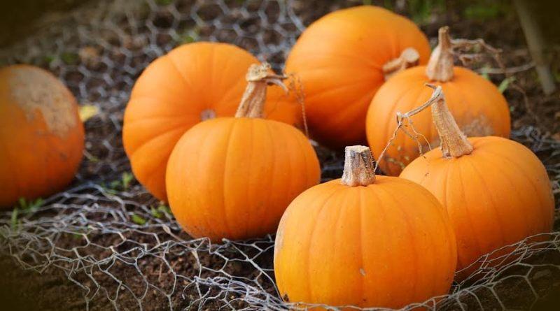 Dlaczego Chrześcijanie nie obchodzą Halloween?