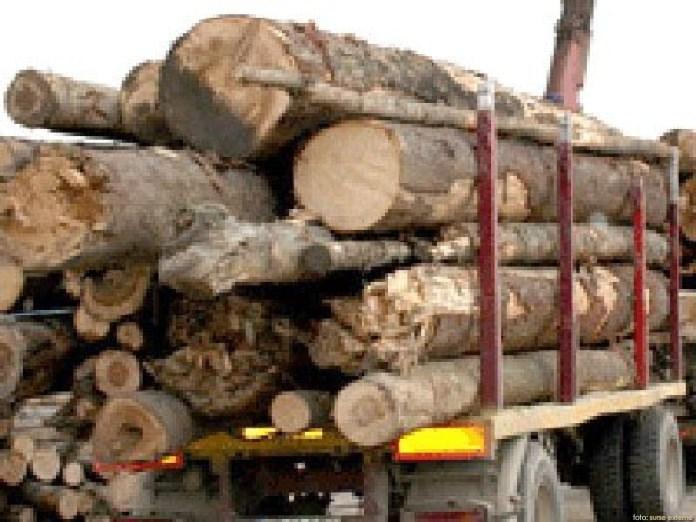 Controale pe linie de silvicultura