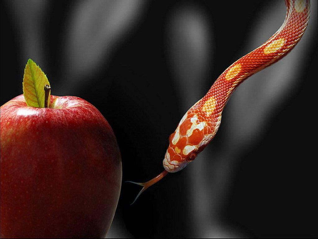 Red Snake and REd Apple