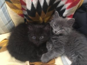 Kittens AM and FM