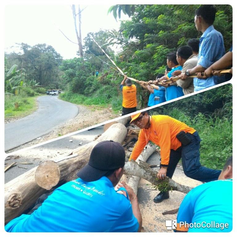Darurat, BPBD Tebang Pohon Rawan Tumbang