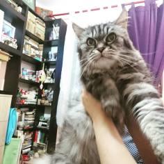bona pisici 5