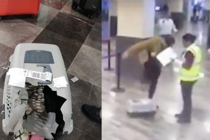 VIRAL: HOMBRE ACUSA A VOLARIS DE ROMPER LA JAULA DE SU MASCOTA PERO LA AEROLÍNEA LO EXHIBE