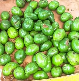 Avocados 3-45
