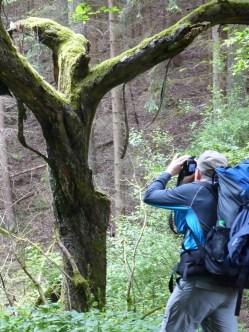 Baumfotografie