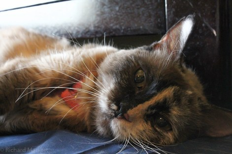 Hello meow