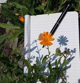 Scrivere è una radura