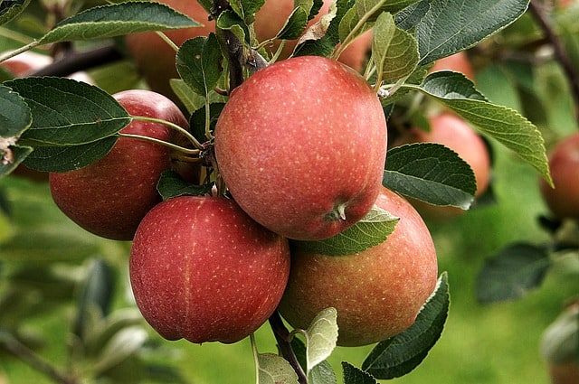 Happening This Weekend: The Annual Linvilla Orchards Apple Festival