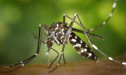 Mosquitos, molestos y mortales