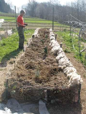 Aiuola Pacciamata Lana - Riempimento dei lati con la lana